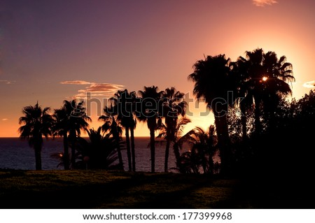palms silhouettes at colourful tropical sunset sky