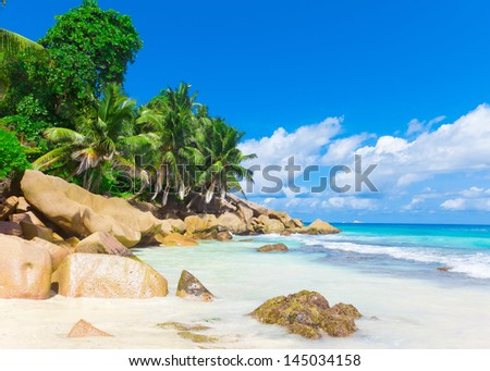 Palms Tranquility Shore - stock photo
