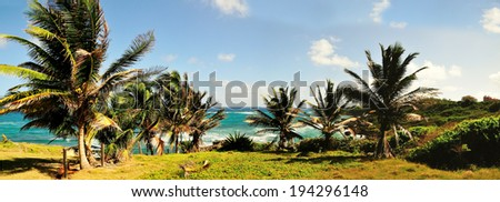 Palms trees fill the hilltop of Bottom Bay Barbados