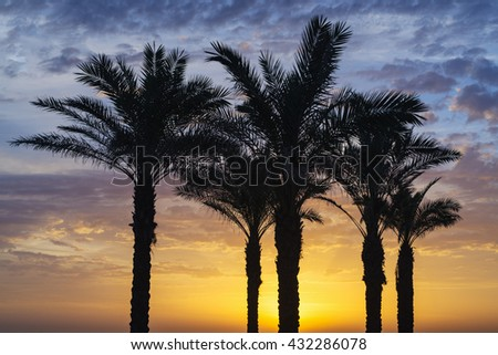 Palms trees of Mill beach, under a beautiful sunset, in Carcavelos, Lisbon, Portugal