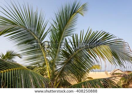palms tropical on beach - stock photo
