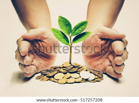 Palms with a tree growing from pile of coins / hands holding a tree growing on coins / csr green business / business ethics / good governance