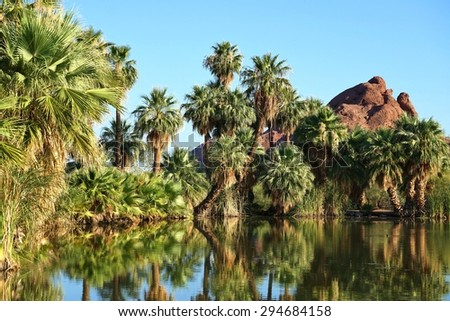 Palmtrees at Papago Lake Park - stock photo