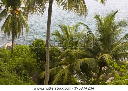 Palmtrees at Patong beach  Phuket,Thailand