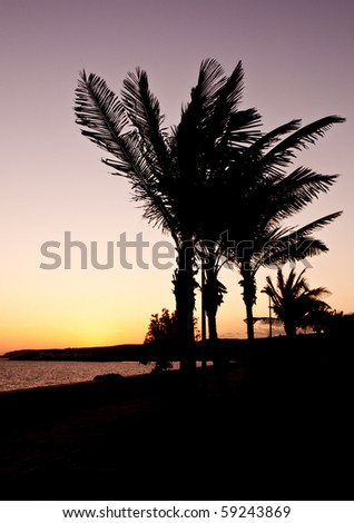 Palmtrees in the sunset - stock photo