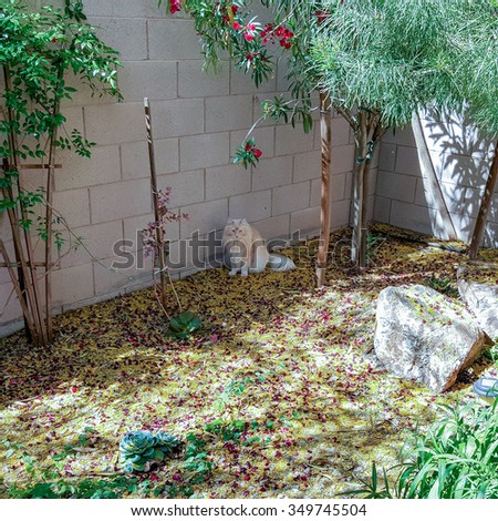 Palo Verde and Oleander flowers and leaves covering backyard grounds after Spring wind outbreak and puzzling house cat with the colorful mess - stock photo