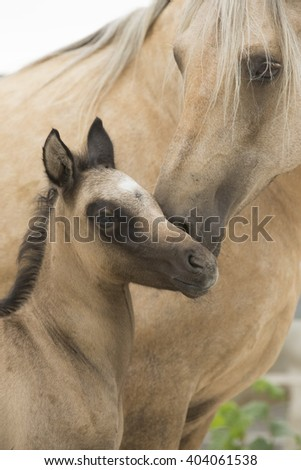 Palomino Colt with Mother