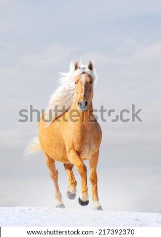 palomino horse in winter - stock photo
