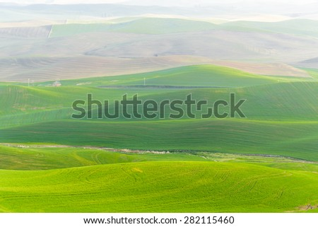 Palouse rolling hills in sunrise. The view from top of Steptoe Butte State Park. - stock photo