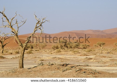 pan and acacia in namibian desert - stock photo