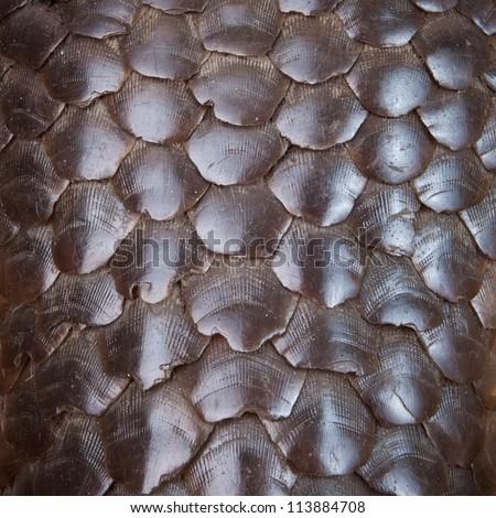 Pangolin skin - stock photo