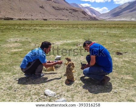 PANGONG LAKE, LEH, LADAKH, INDIA - JUL 8 : Unidentified tourists and marmots on the green grass field near Pangong tso lake, Leh, Ladakh, India on July 8, 2014