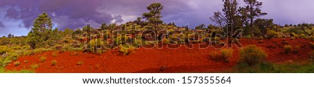 Panorama, Backlit desert landscape, junipers, snags and scrub brush, Torrey,Utah  - stock photo