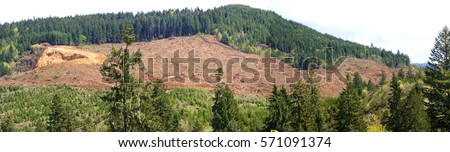 Panorama  - Clear cut logging slope,  just outside Willamette National Forest,  Central Oregon Cascades