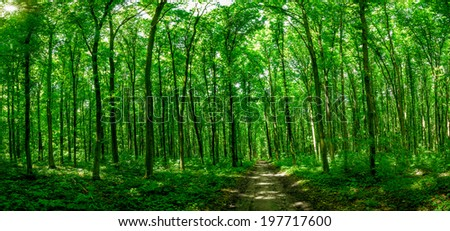 panorama forest trees. nature green wood sunlight backgrounds.  - stock photo