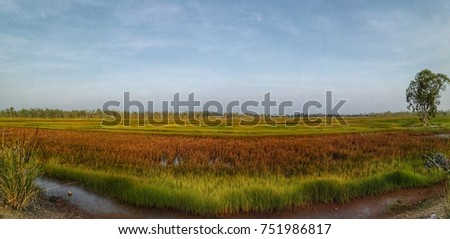 Panorama landscape of colorful grassland, the important wetland reserve for wildlife. Beautiful scenery of nature, green and red grass, blue sky in winter time of Asian tropical country, Thailand.