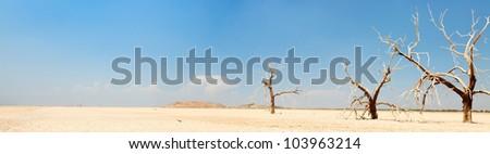 Panorama landscape of dead trees in dry landscape near salton sea. USA. Dried lake. - stock photo