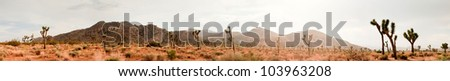 Panorama landscape of Joshua Tree National Park, USA. - stock photo