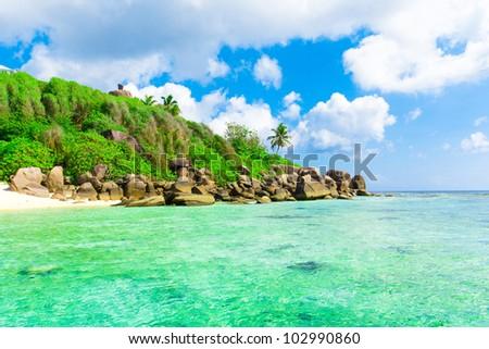 Panorama Landscape Palms - stock photo