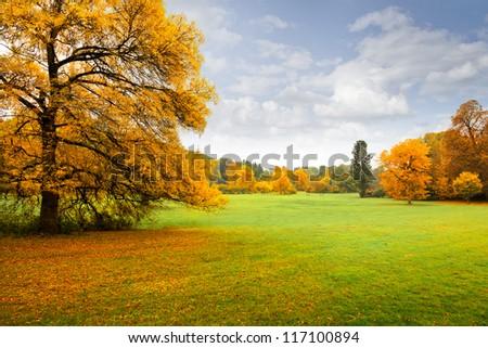 Panorama. Lonely beautiful autumn tree. Autumn landscape. - stock photo