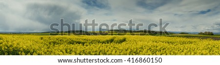 Panorama of a canola field at Hohe Strasse, Wetterau, Hesse, Germany