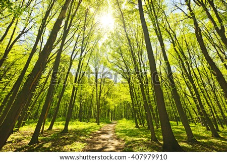 Panorama of a green summer forest  - stock photo