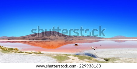 "Panorama of a laguna at the ""Ruta de las Joyas altoandinas"" in Bolivia with pink flamingos fishing in the lake. In the foreground flying flamingos crossing the scene. - stock photo"
