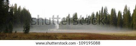Panorama of a meadow with low fog early in the morning near Sequoia National Park, California - stock photo