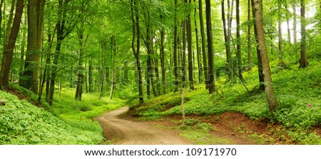 Panorama of a path through a lush green summer forest - stock photo
