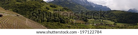 panorama of a vineyard in the Swiss alps - stock photo