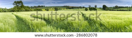 Panorama of an English wheat field in spring. The wheat is still green and set against a backdrop of the countryside - stock photo