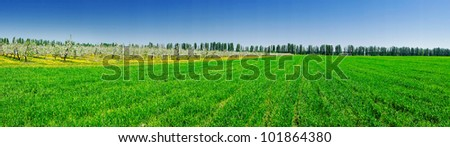 Panorama of apple garden and green field by spring. - stock photo