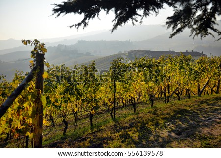 panorama of autumn vineyards in Italy, Piedmont