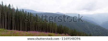 Panorama of Carpathian mountains in summer sunny day