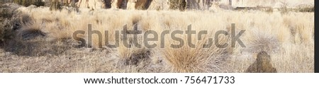 Panorama of Dry grass in the fall along the Crooked River at Smith Rock State Park, Oregon
