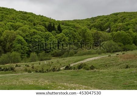 Panorama of ecological path through a  green springtime forest, Vitosha mountain, Bulgaria     - stock photo
