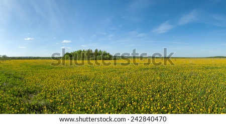 panorama of green spring blossoming field with dandelions and blue sky