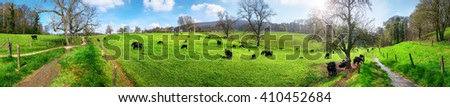 Panorama of idyllic rural landscape in spring sunshine, with blue sky and cows grazing on beautiful green meadows - stock photo