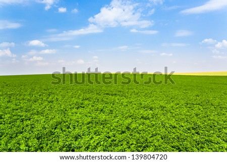 panorama of lucerne field under blue sky in France - stock photo