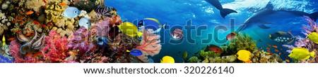 Panorama of marine species - stock photo