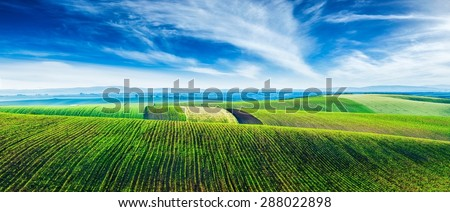 Panorama of Moravian rolling landscape with lines of sprouts. Moravia, Czech Republic - stock photo