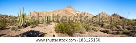 Panorama of Organ Pipe Cactus National Monument. - stock photo