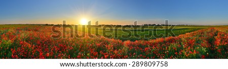 Panorama of poppy field in sunrise countryside - stock photo