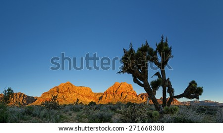 panorama of Red Rocks mountains lit by morning light with joshua tree and blue sky copy space - stock photo