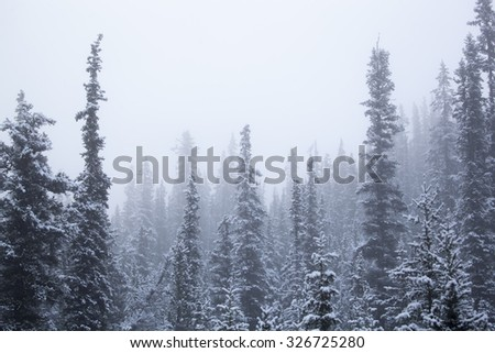 Panorama of snow covered trees in mist at Icefield Parkway, Jasper / Banff National Park, Alberta Canada - stock photo
