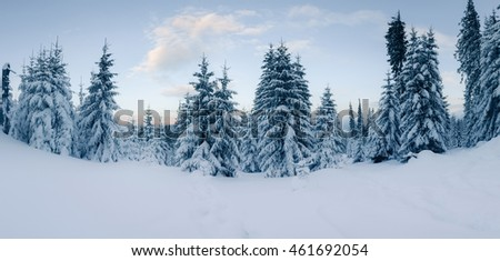 Panorama of snowy woods