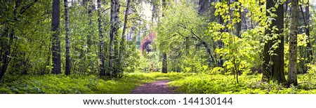 Panorama of spring forest - stock photo