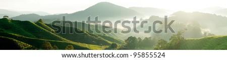 Panorama of Tea Plantations at Cameron Highlands Malaysia - stock photo