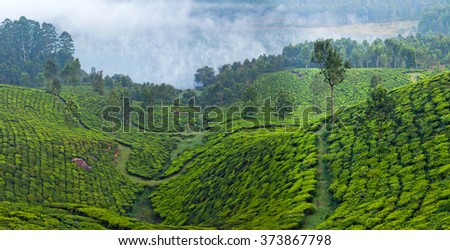 Panorama of tea plantations on misty morning in Munnar, Kerala, South India. Munnar is situated at around 1,600 metres above sea level in the Western Ghats range of mountains. - stock photo