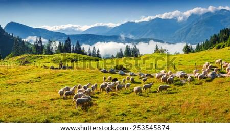 Panorama of the alpine pastures in the Slovenian. Julian Alps. Triglav National Park. - stock photo